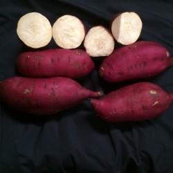 Murasaki Sweet Potatoes